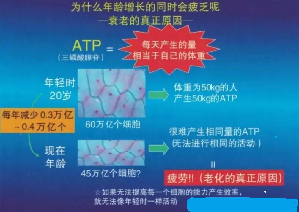 ATP能量2.jpg
